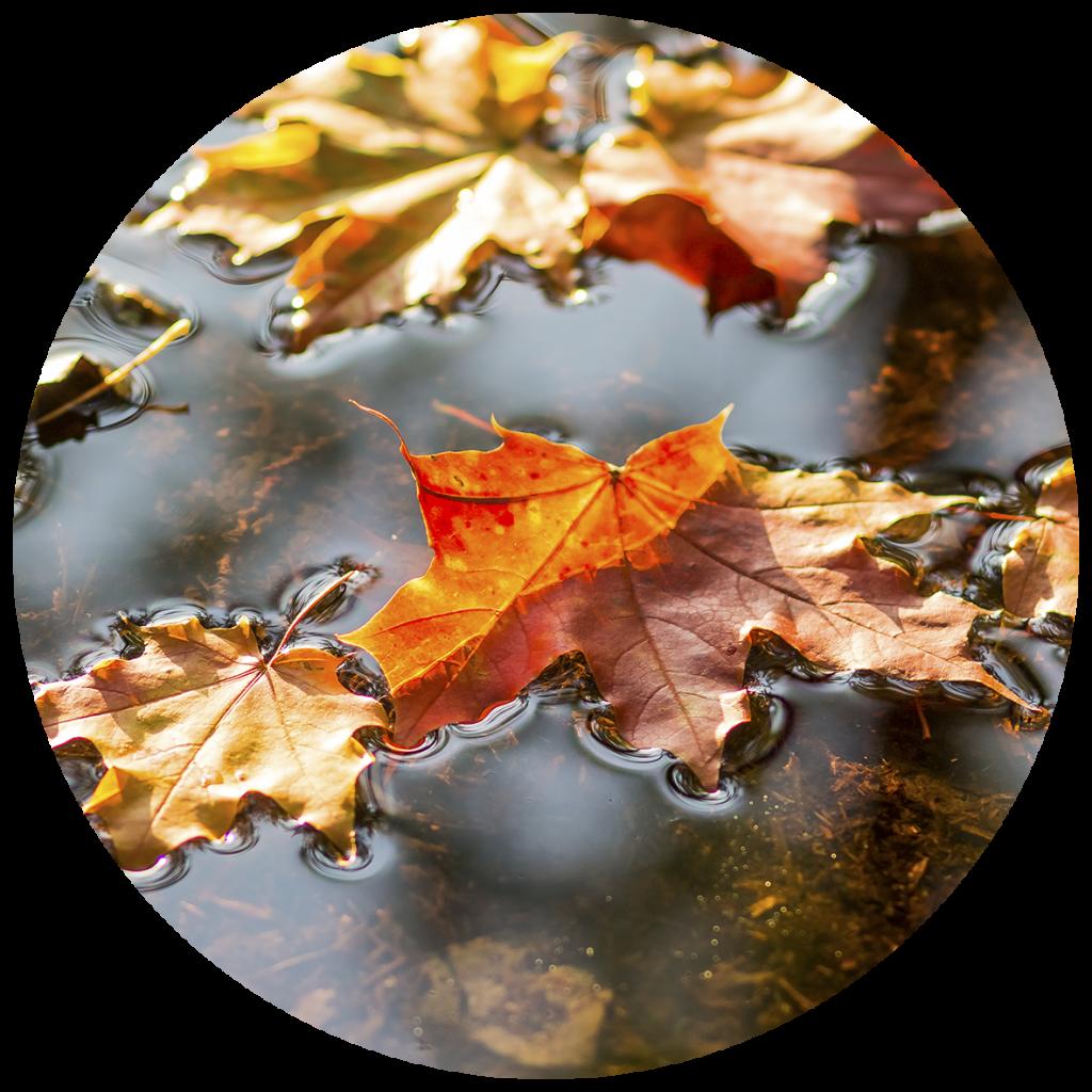 hojas caídas para foto de los testimonios